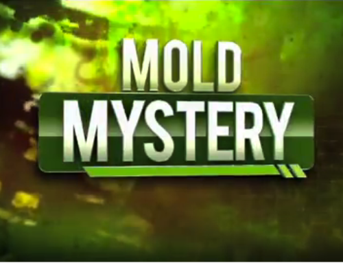 The Mold Lawyer Featured on WSVN Channel 7 News