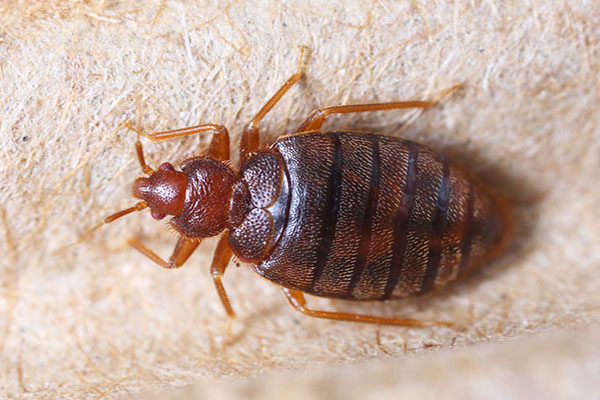 Bed Bug Infestation Lawsuit Against Landlord Results in a