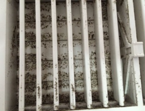 Is Your Air Conditioning System Causing Mold in your Florida Home?